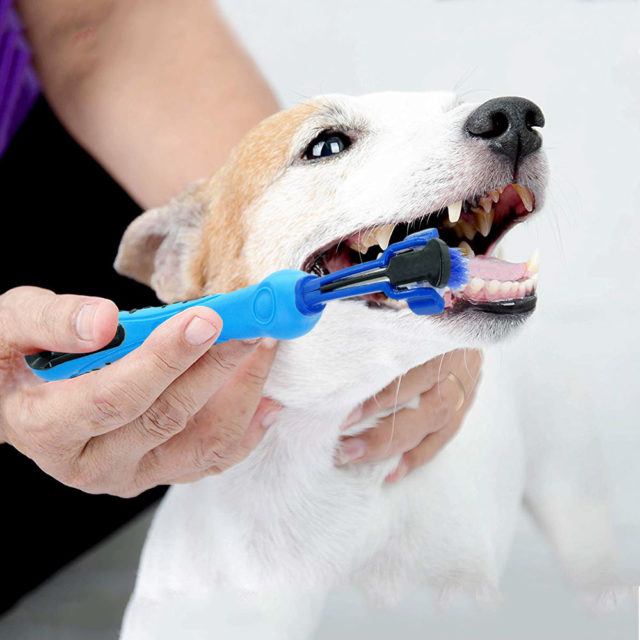 Dog's Three Headed Toothbrush
