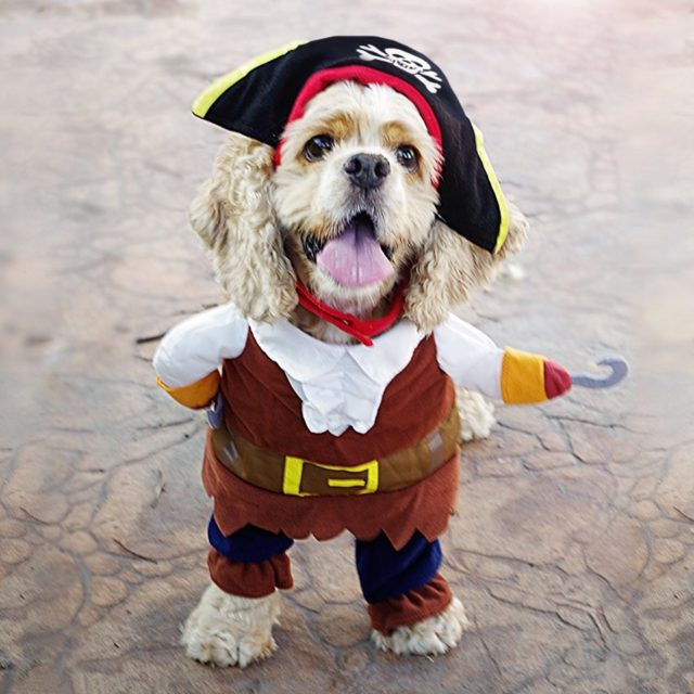 Cotton Pirate Costume for Cats
