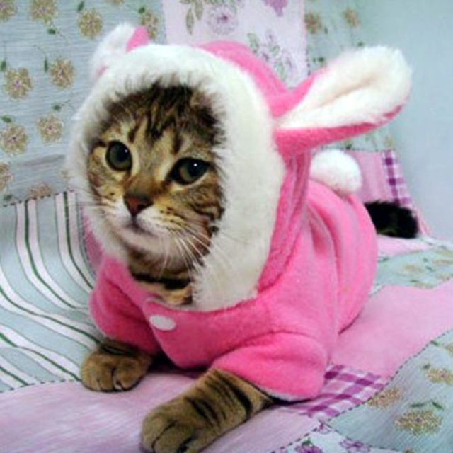 Pink and Red Suit with Bunny Ears for Cats