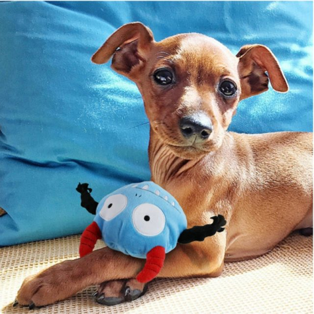 Dog's Blue Squeaky Toy